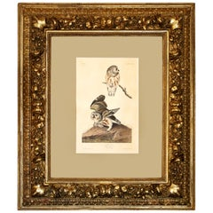 "Monumental Framed Audubon Print of ""The Little Owl,"" 1834 Havell Edition"