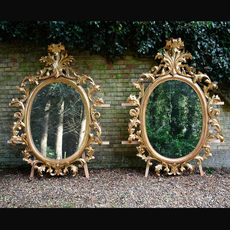 A remarkable pair of huge 19th century oval florentine carved giltwood mirrors standing 2.3 meters high.  European circa 1880.  These extremely impressive open carved and rare pair of oval giltwood mirrors are of typical Florentine design,