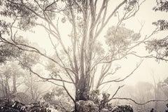 Eucalyptus I (Photograph, Print, Nature, Trees, Landscape, Sky, Cream Black)