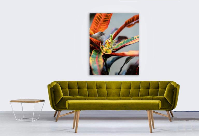 Macro Dancer by Moritz Hormel contemporary photography of a tropical flower For Sale 4
