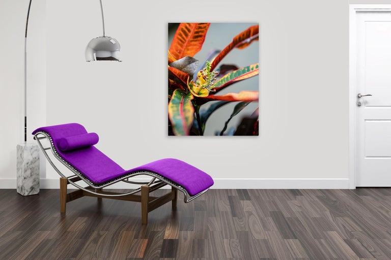 Macro Dancer by Moritz Hormel contemporary photography of a tropical flower For Sale 5