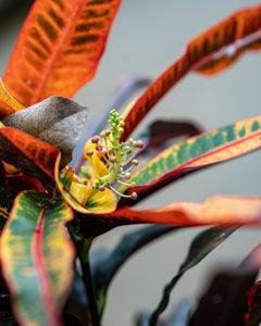 Macro Dancer by Moritz Hormel contemporary photography of a tropical flower