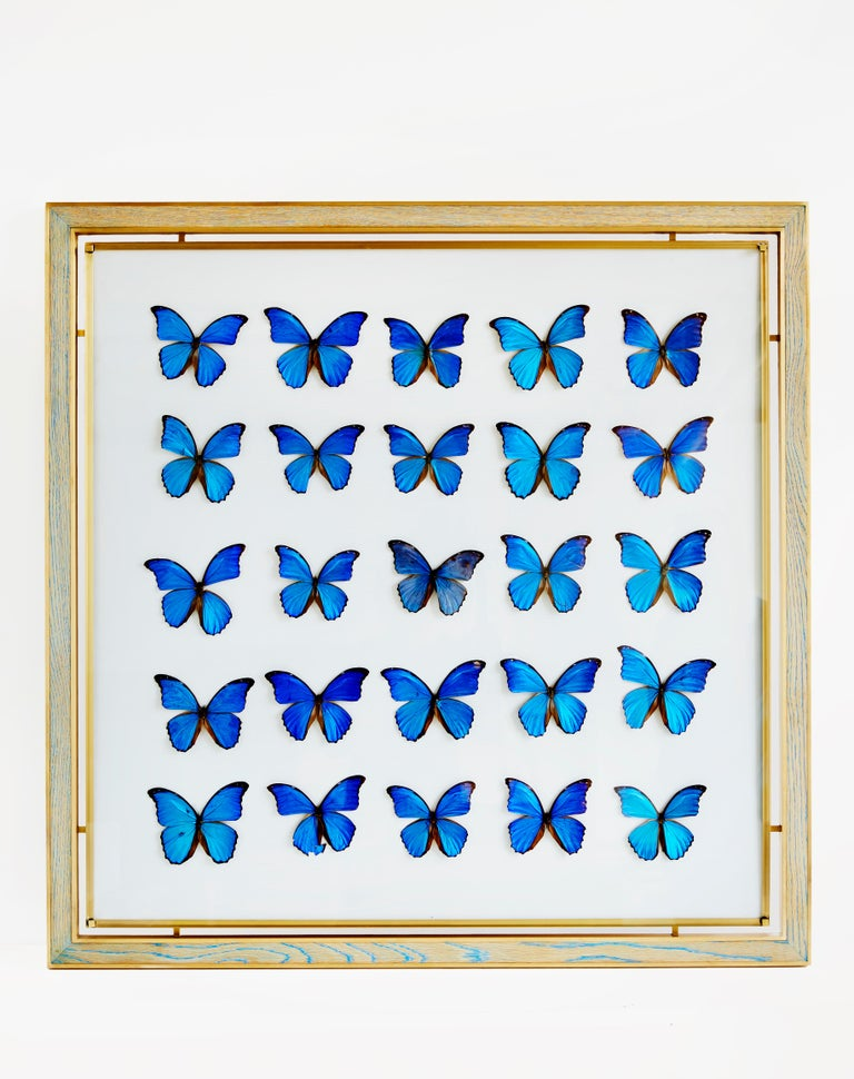 Morpho blue butterfly frame in white oak and brass by Cam Crockford  Additional Information: Materials: White oak - brass - linen - blue morpho butterfly Dimensions: 48 W x 1.25 D x 48 H inches.