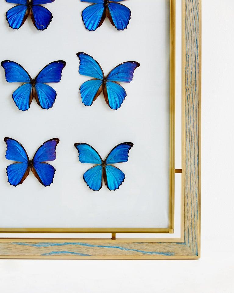 Modern Morpho Blue Butterfly Frame in White Oak and Brass by Cam Crockford For Sale