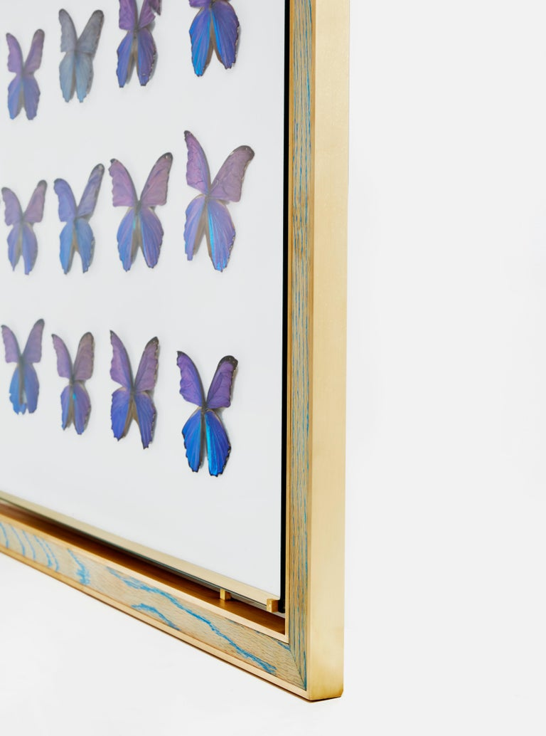 American Morpho Blue Butterfly Frame in White Oak and Brass by Cam Crockford For Sale