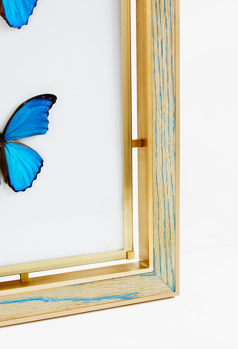 Morpho Blue Butterfly Frame in White Oak and Brass by Cam Crockford In New Condition For Sale In Brooklyn, NY