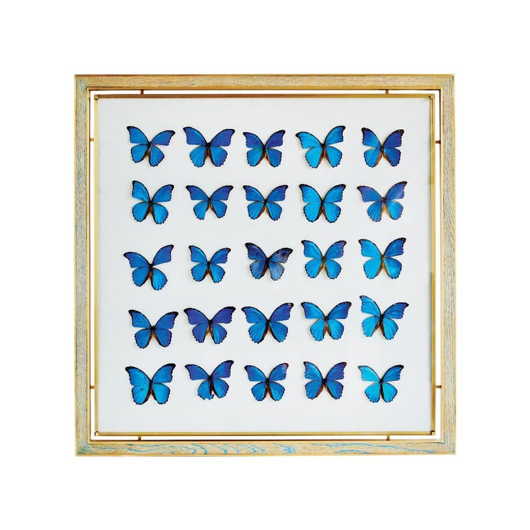 Morpho Blue Butterfly Frame in White Oak and Brass by Cam Crockford For Sale