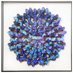 Morphos Butterflies Glass Box Frame