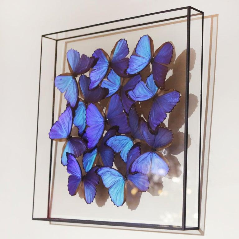 Peruvian Morphos Butterflies Medium Frame