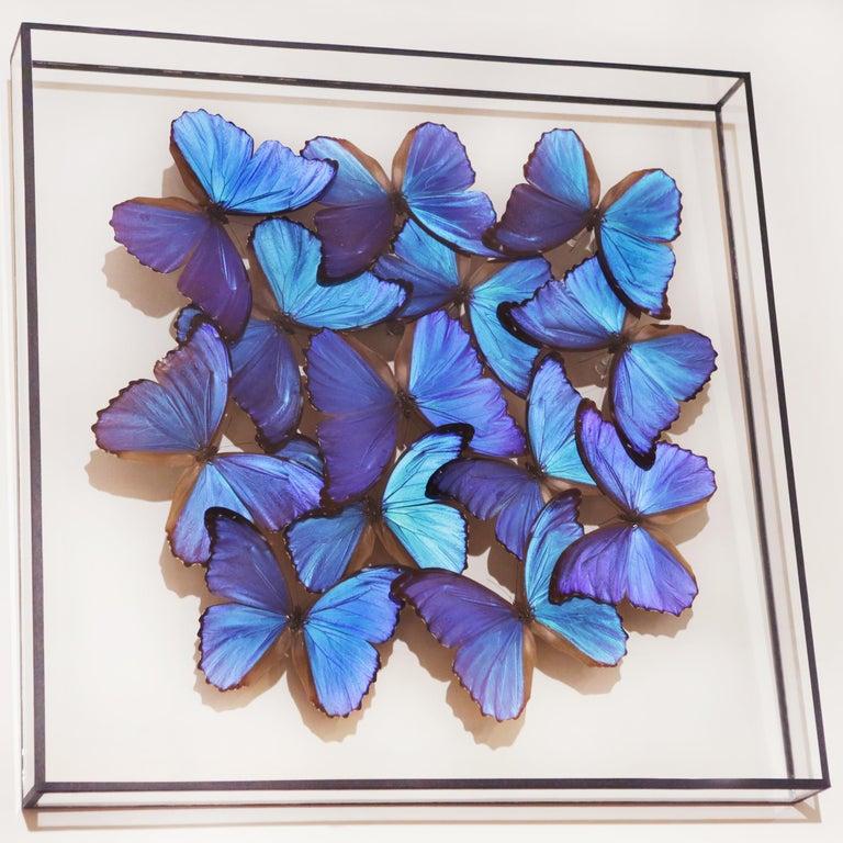 Hand-Crafted Morphos Butterflies Medium Frame