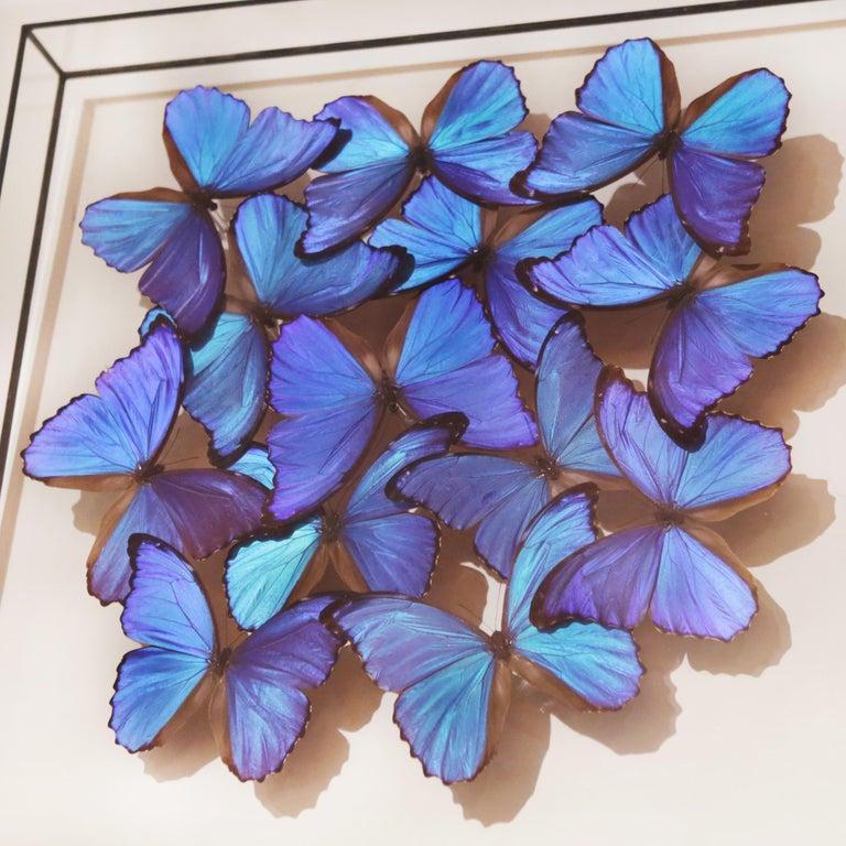 Morphos Butterflies Medium Frame In New Condition In Paris, FR