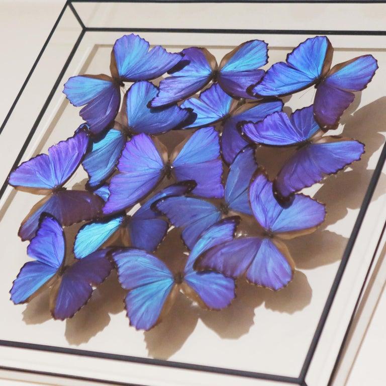 Contemporary Morphos Butterflies Medium Frame
