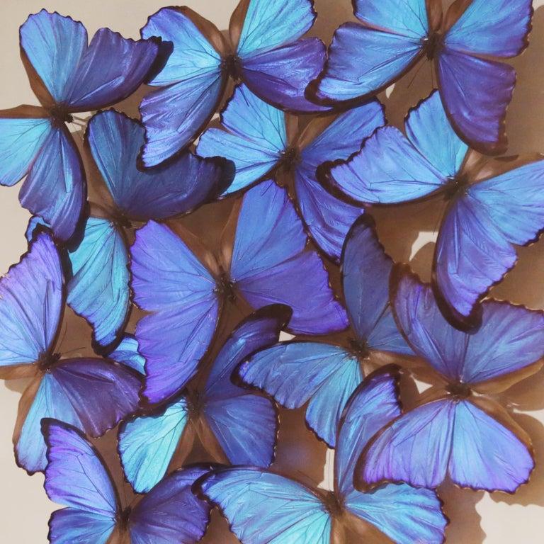 Glass Morphos Butterflies Medium Frame
