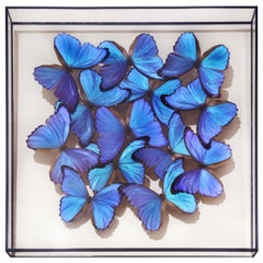 Morphos Butterflies Medium Frame