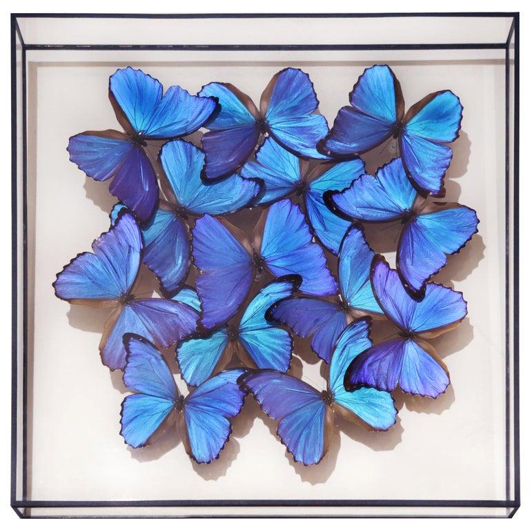 Morphos Butterflies Medium Frame