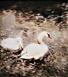 """""""Swans"""", Post-impressionist swans in a river backdrop, original oil on board"""