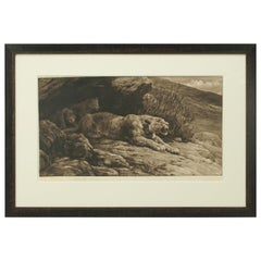 Mountain Lion and Cubs by Herbert Dicksee, Antique Etching