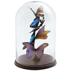 Mounted Blue Butterflies in Glass Dome