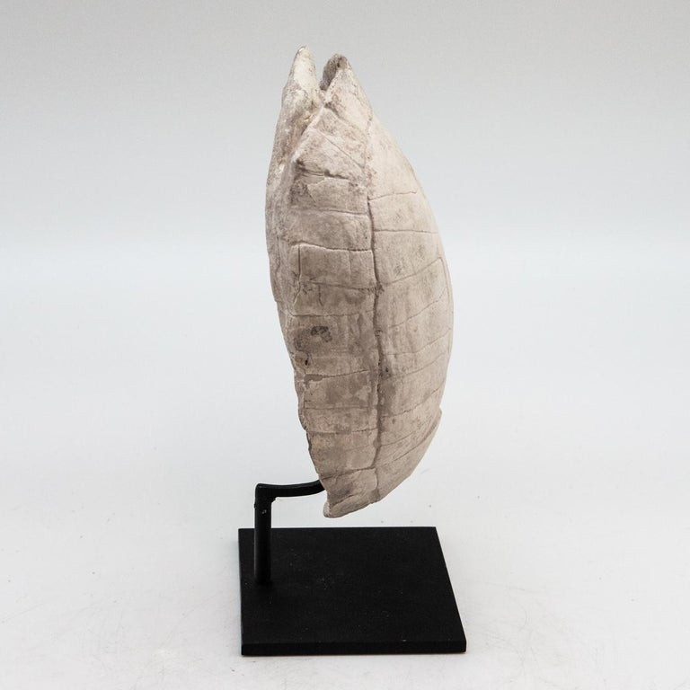 Contemporary Mounted Fossilized Turtle For Sale