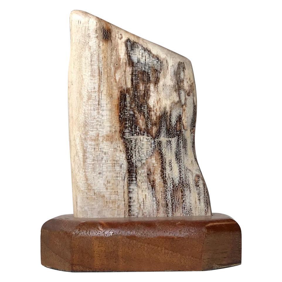 Mounted Object of Fossilized Wood, Scandinavia