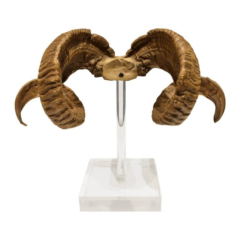 Mounted Ram Horns on Lucite, 1970s For Sale 2