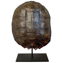 Mounted Snapping Turtle Shell