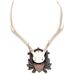 Mounted Stag Antlers Dated 1896