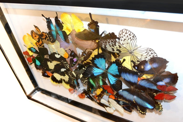 French Multicolors Rare Butterflies under Rectangular Glass Frame For Sale