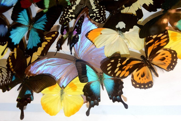 Multicolors Rare Butterflies under Rectangular Glass Frame In Excellent Condition For Sale In Paris, FR