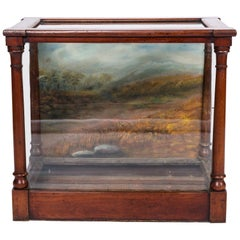 Museum Glass Case