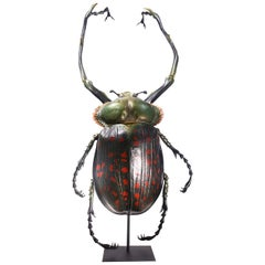 Museum Model of a Cheirotonus Long-Armed Beetle