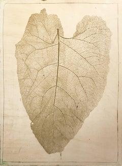"""Rhubarb"", botanical soft-ground etching leaf study print, metallic gold ink."