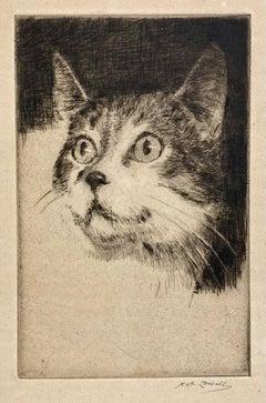 (Head of a Cat)