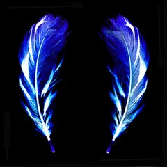 Flight of Fancy - Electric Blue Feathers - Conceptual, Color Photography