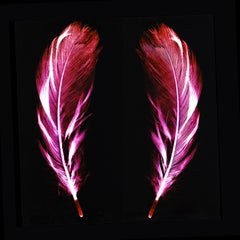 Flight of Fancy - Electric Pink Feathers - Conceptual, Color Photography