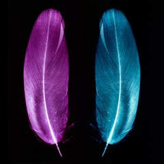 Plum & Ice Blue Pair of Feathers - Conceptual, Color Photography