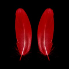Scarlet Butterfly - Red Feathers - Conceptual, Color Photography