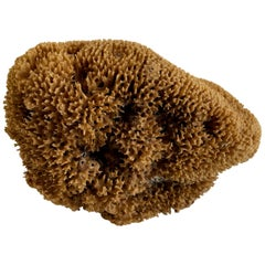 Natural Beautiful Shaped Natural Sea Sponge