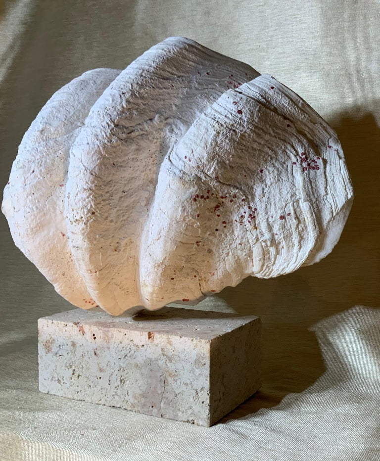 Natural Clamshell Mounted on a Natural Coral Base For Sale 5