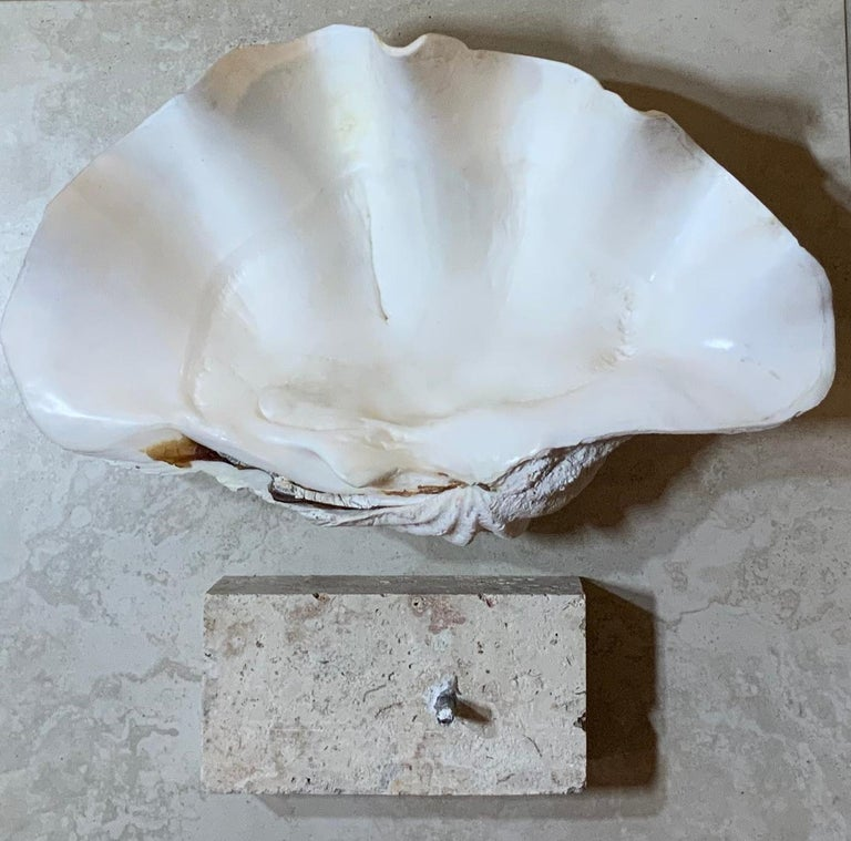 Natural Clamshell Mounted on a Natural Coral Base For Sale 11