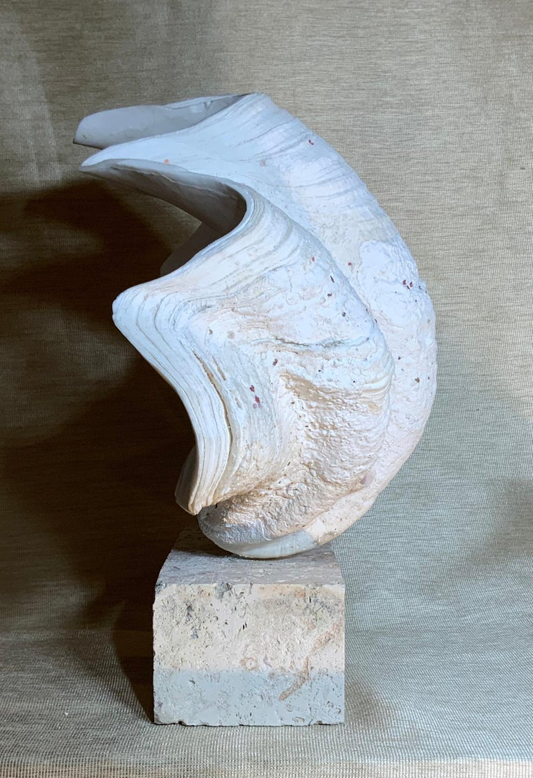 Natural Clamshell Mounted on a Natural Coral Base For Sale 1