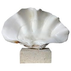 Natural Clamshell Mounted on a Natural Coral Base