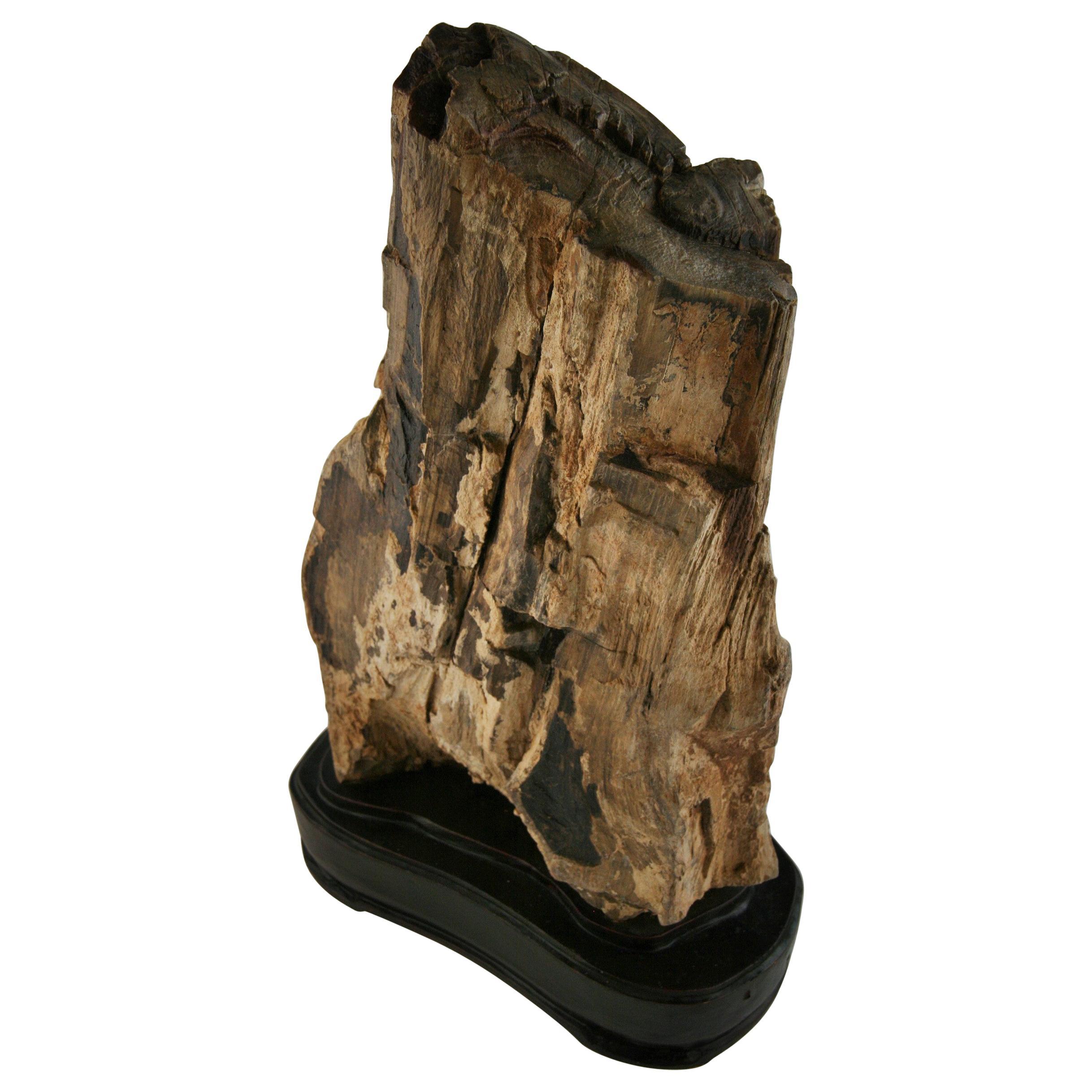 Natural Large  Petrified Wood as Sculpture