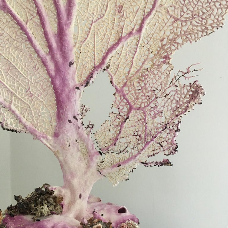19th Century Natural Sea Fan Coral Mounted on an Ebonised Base For Sale