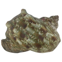 Natural Turbo Marmoratus or Green Turban Shell