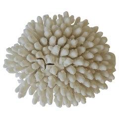 Coral Piece