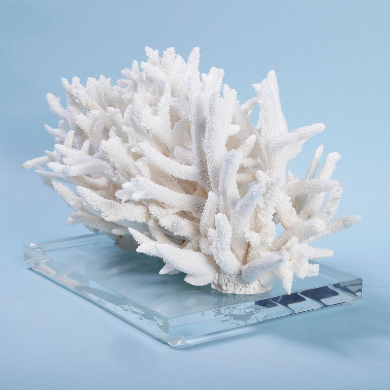 Hand-Crafted Natural White Coral Sculpture on Lucite For Sale