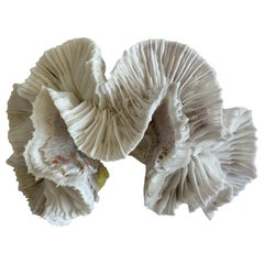 Natural White Paper Coral