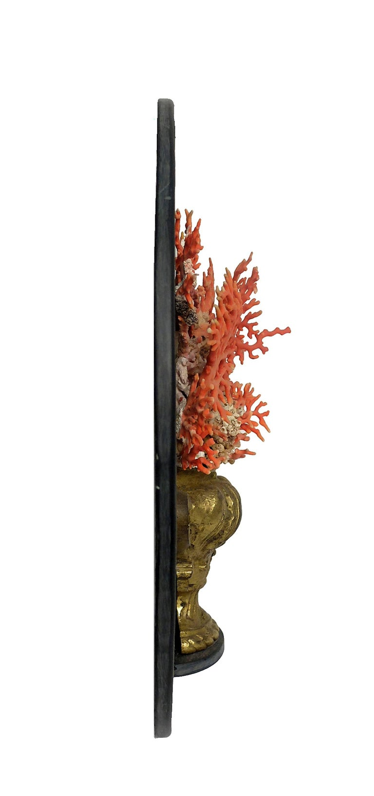 Naturalia Specimen, Branches of Mediterranean Coral, Italy, 1850 In Good Condition For Sale In Milan, IT