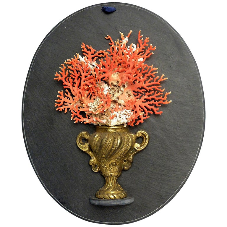 Naturalia Specimen, Branches of Mediterranean Coral, Italy, 1850 For Sale